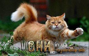 Кіт, кішка